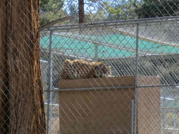 PCT California Desert Tiger