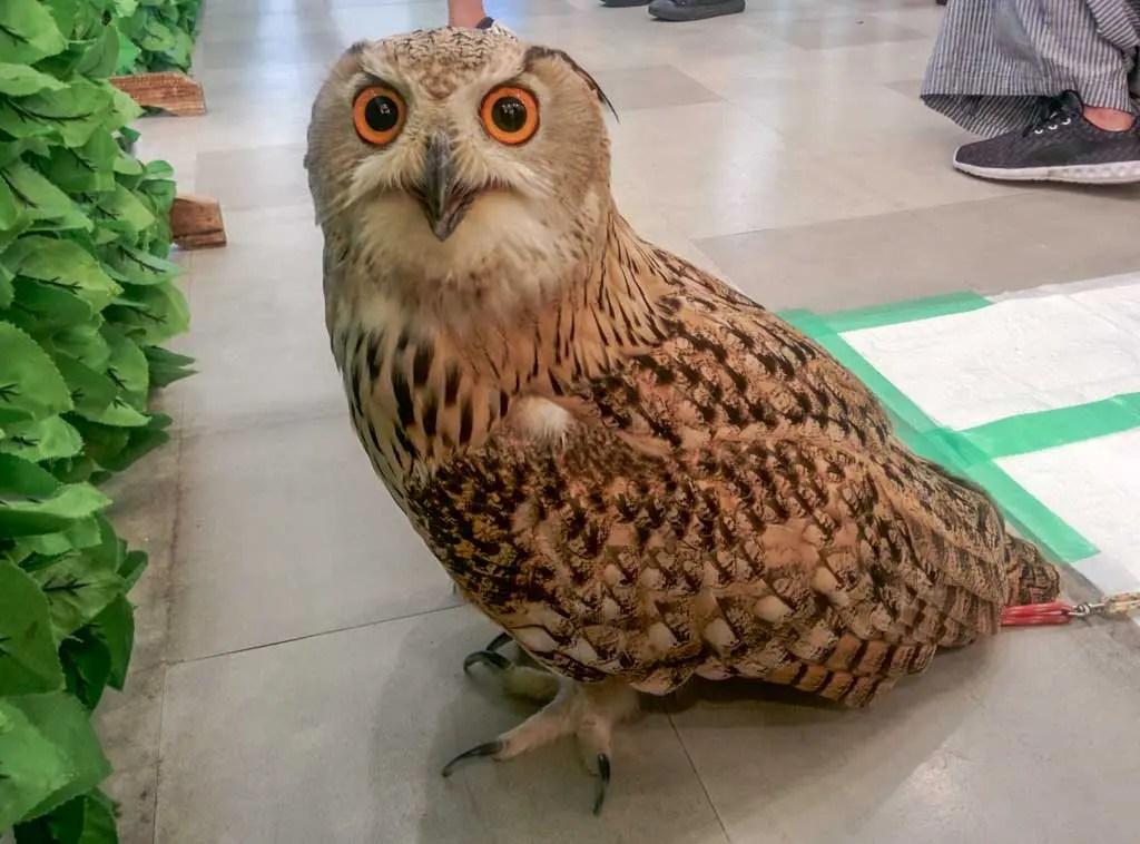 Japan-Osaka-Owl