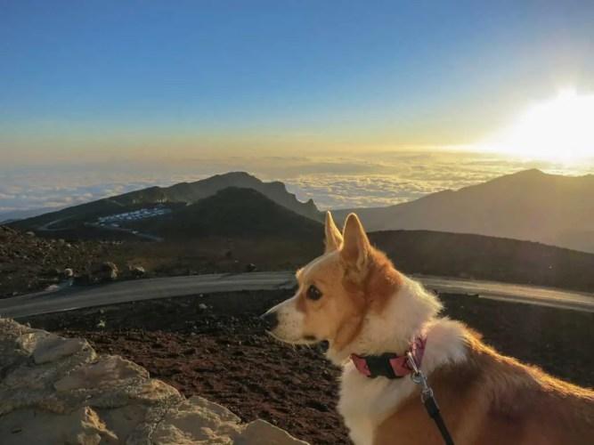 USA-Maui-Haleakala-Dog