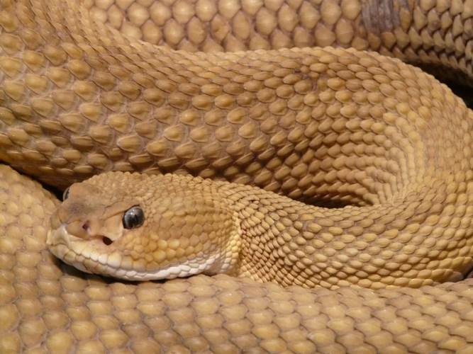 Stock-Snake-Image