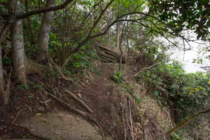 brazil-rio-pao-de-acucar-trail-10