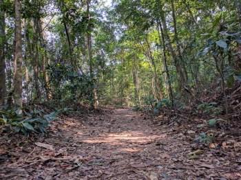 brazil-rio-de-janerio-corcovado-trail-9