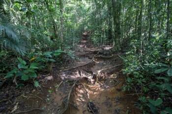 pedra-bonita-trail-1