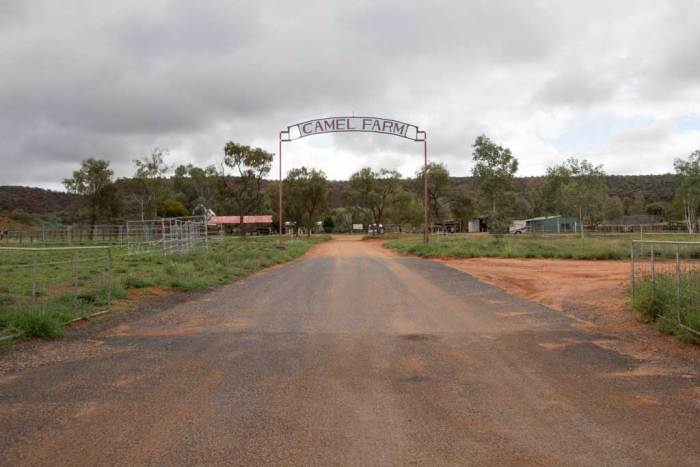 australia-outback-camel-farm