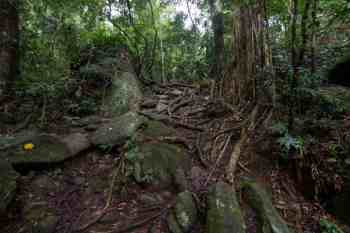 brazil-rio-de-janeiro-cachoeira-dos-primatas-trail-1
