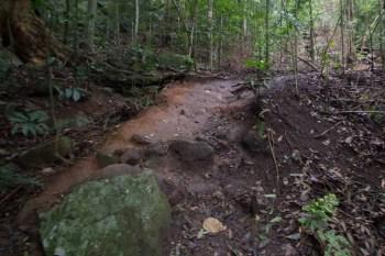 brazil-rio-de-janeiro-cachoeira-dos-primatas-trail-3