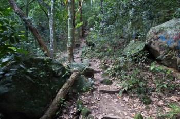 brazil-rio-de-janeiro-pedra-da-gavea-trail-10