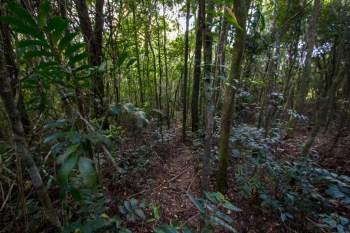 pedra-bonita-alternate-trail-2