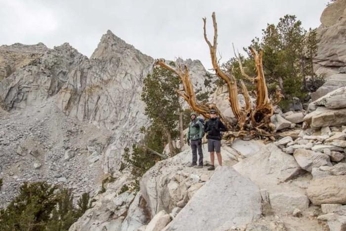 Sierra-Fall-3-Appa-Moist-Tree