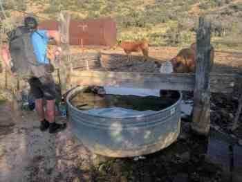 CDT-New-Mexico-Water-Source-Cows