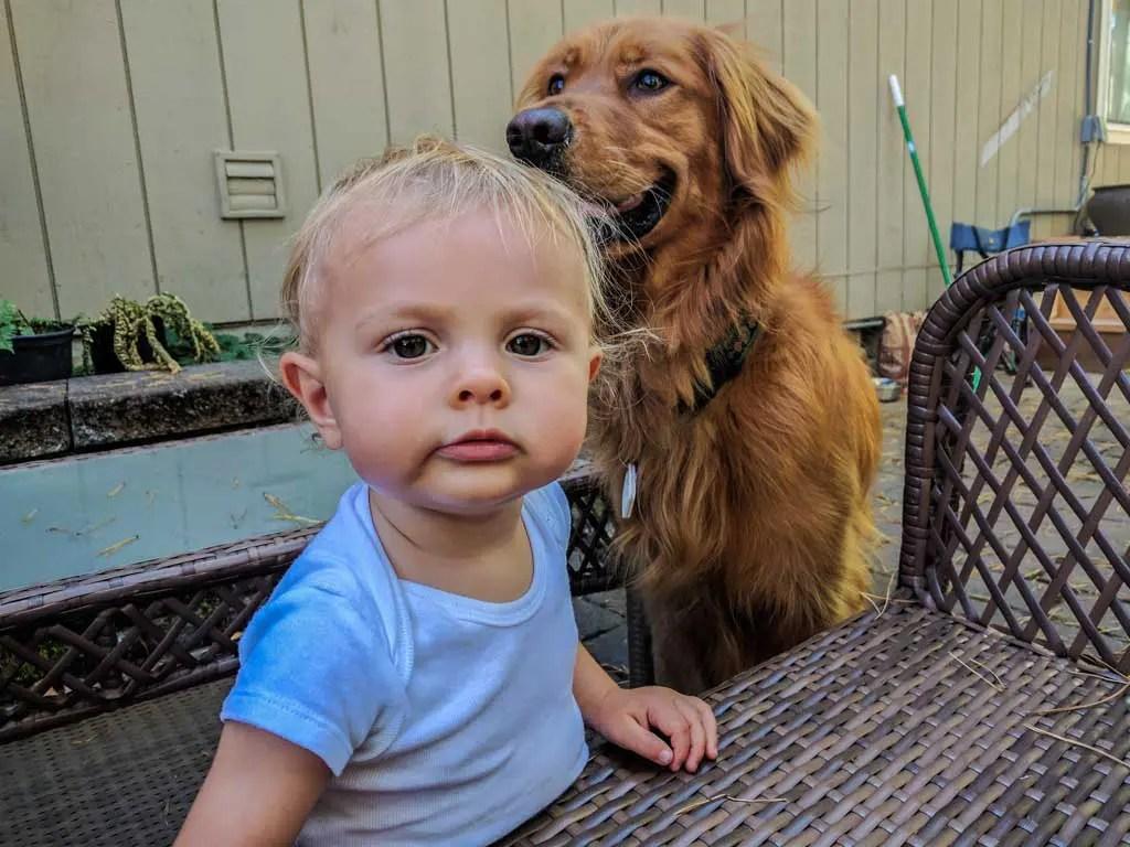 USA-Oregon-Baby-Dog