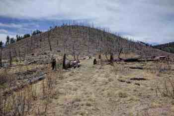 CDT-New-Mexico-Burn