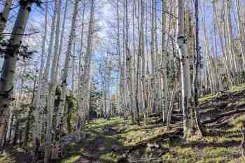CDT-New-Mexico-Mount-Taylor-Climb