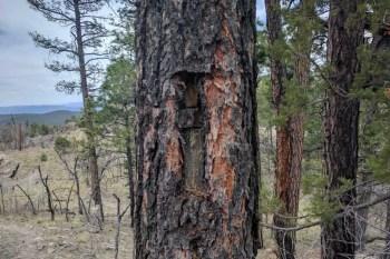 CDT-New-Mexico-Tree-Marker