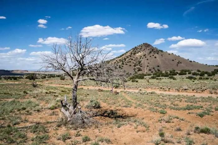 CDT-New-Mexico-Desert-Tree-Trail-Hill