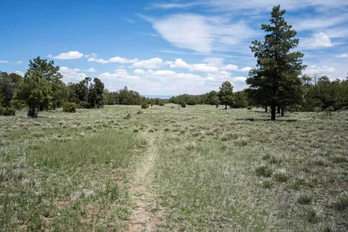 CDT-New-Mexico-Trail-Grass