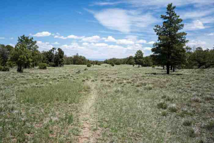 CDT-New-Mexico-Trail-Grass