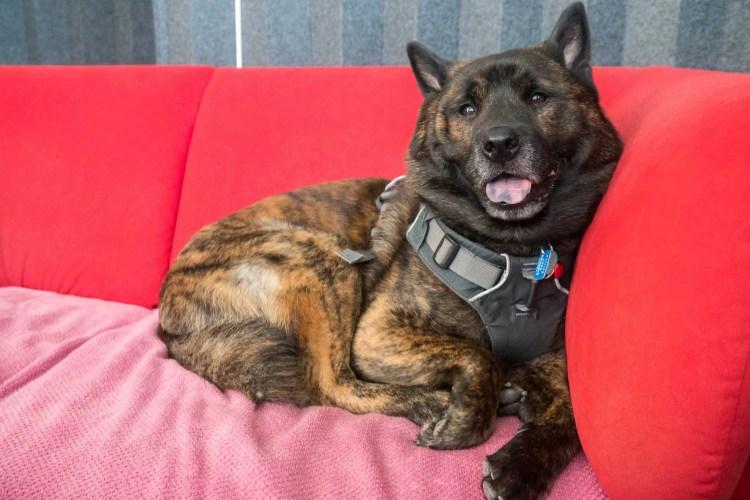 LOCUS GEAR Dog