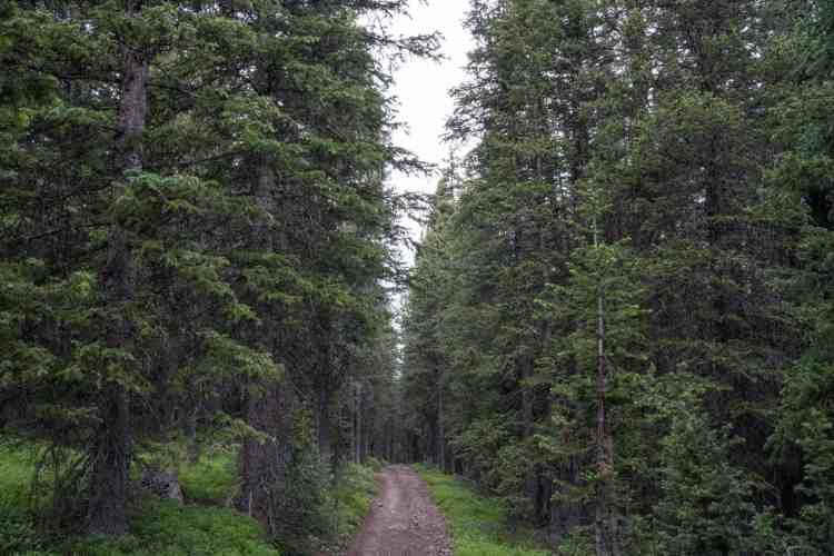 CDT Colorado Forest Road Bike Path
