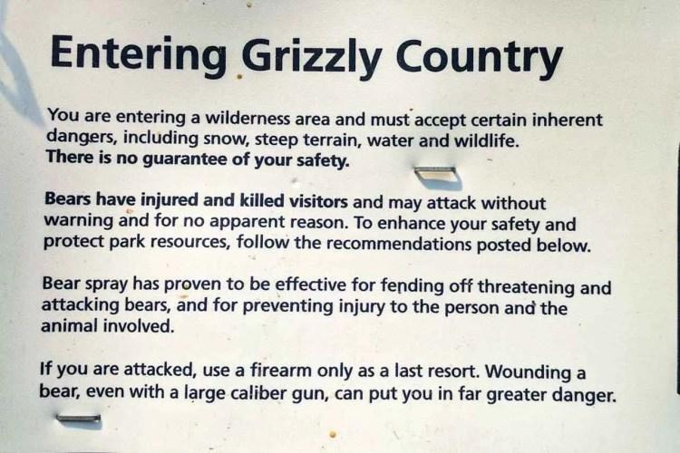 CDT Montana Grizzly Bear