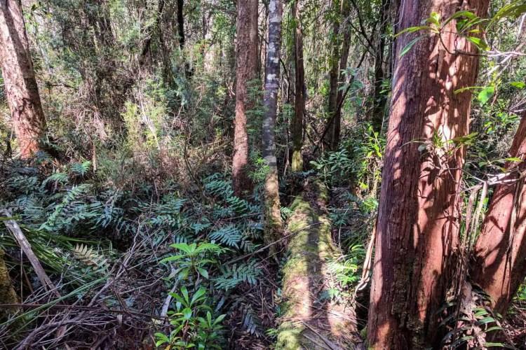 Tasmania Federation Peak Track Bad Trail