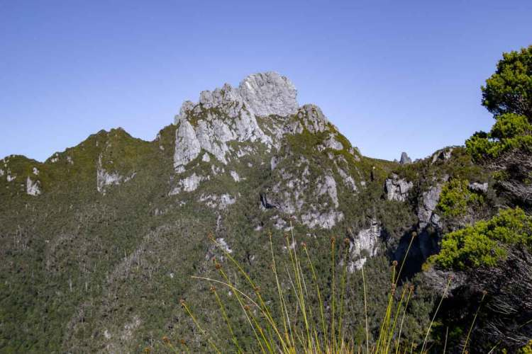 Tasmania Federation Peak Track View