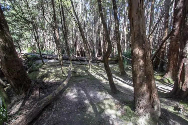 Tasmania Federation Peak Track Forest Camp