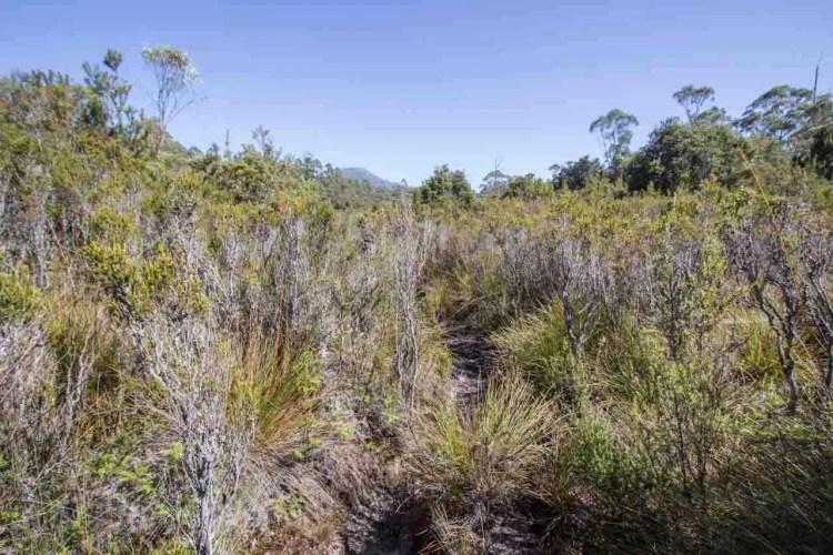 Tasmania Federation Peak Track Grass Track