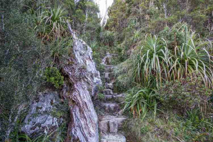 Frenchmans Cap Track Steps