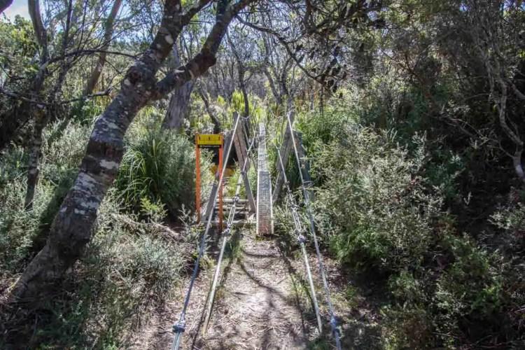 Tasmania Mount Anne Circuit Birdge