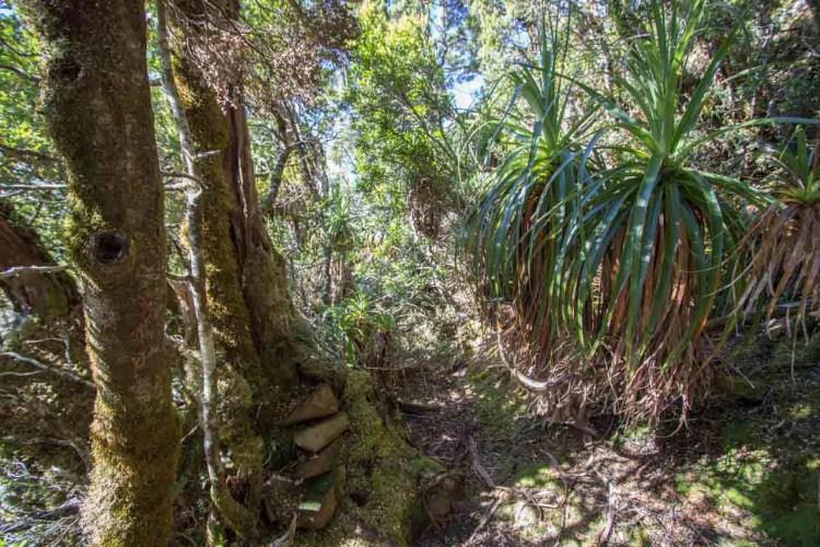 Tasmania Mount Anne Circuit Bush