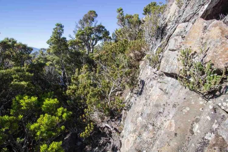 Tasmania Mount Anne Circuit Lightning Ridge