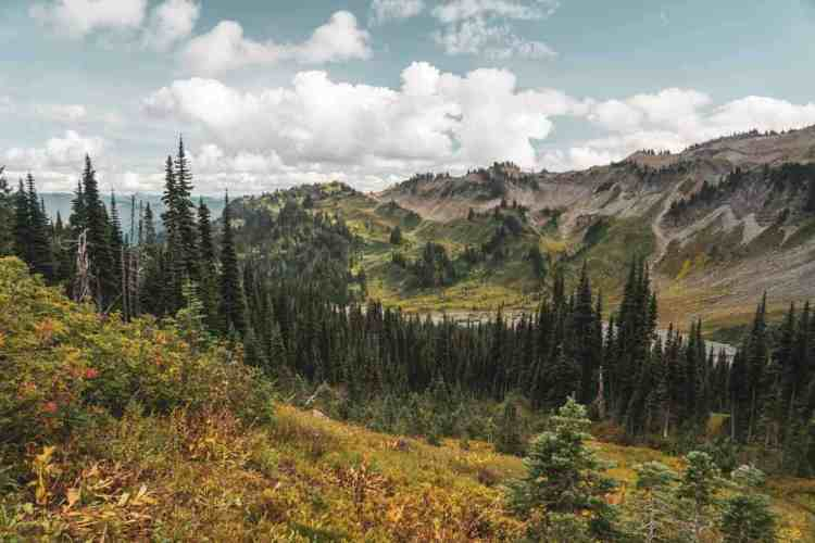 Washington Wonderland Trail Sun Flowers