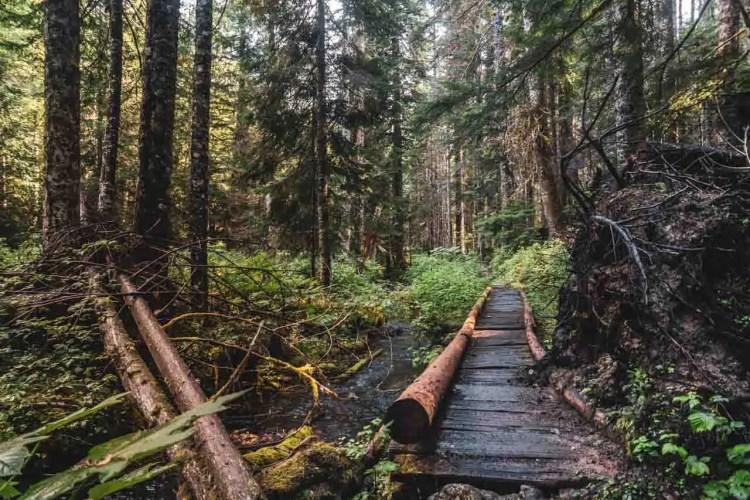 Washington Wonderland Trail Bridge