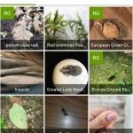 iNaturalist nature app