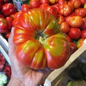 Giant tomato in Corsica