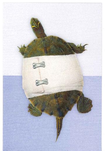 Bandaged Turtle Get Well Card Greeting Cards Hallmark