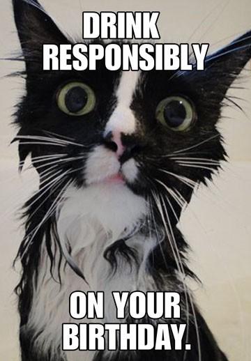 Wet Cat Funny Birthday Card End Of Life Hallmark