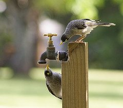birds-thinking