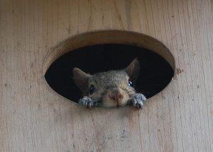 remarketing-squirrel