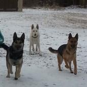 Bandit, Jetta, and Shiloh