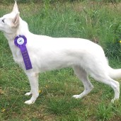 2018 Athens Show Best of Breed