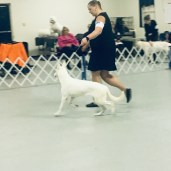 7 months old in the big dog class!