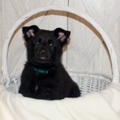 Green Solid Male RESERVED
