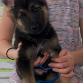 Available Blue Male