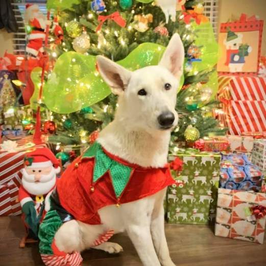 Ivory Christmas Elf 2019