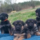 Females Orange, Purple, Black, White