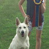 Virtual AKC Rally Novice Title! 2020