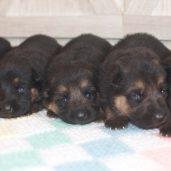 6 Females