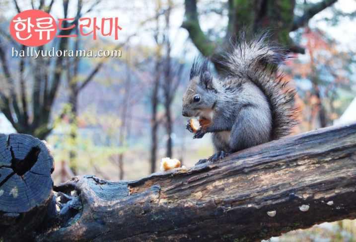 Squirrel (chipmunk?) at Nami Island